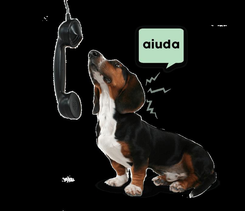 Perro llamando